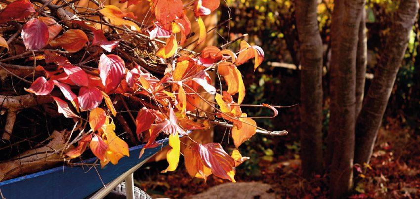 Der Herbst ist da …
