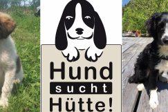 Hund sucht Hütte – adoptieren statt kaufen