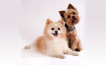 Hundekleidung  – sinnvoll oder nicht?
