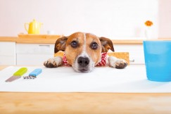 Katze, Hund & Co.:  gesund und vital ernährt