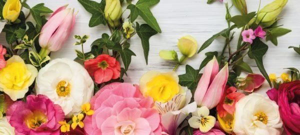 Frühlingszeit bei Blumen Holler