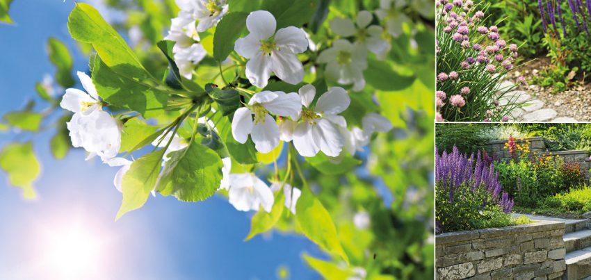 Der Frühling im Garten – Tipps vom Profi
