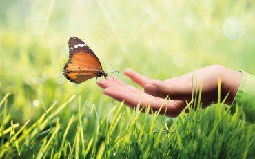 Nachhaltigkeit  – ein modernes Schlagwort?